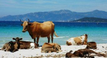 Campen auf der französischen Insel Korsika