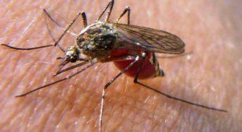 Mückenplage 2017 – Tipps zur Bekämpfung