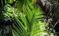 Babassuöl – Effekte und Wirkungsweise