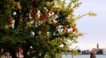 Granatapfel – Die Speise der Götter