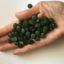 Die Süßwasseralge Chlorella – Teil 2