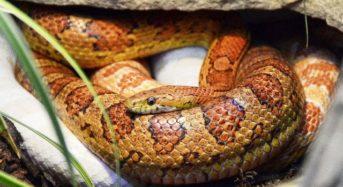 Schlangenhaltung – das sollte beachtet werden