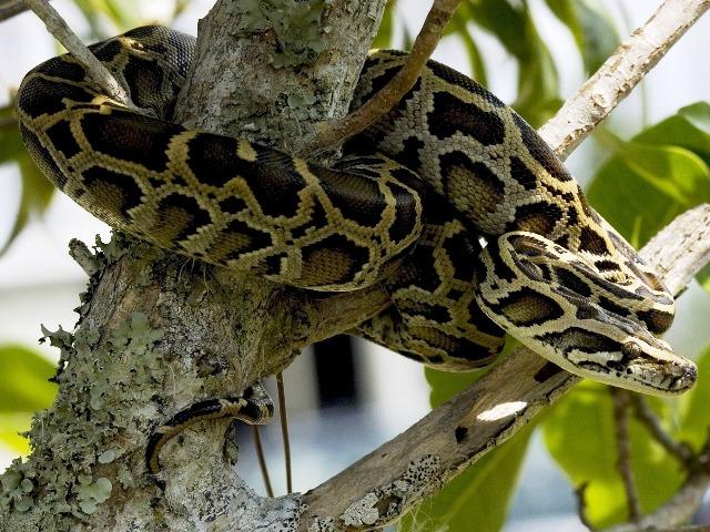 Schlangenhaltung