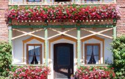 Die beliebtesten Pflanzen für Blumenkästen