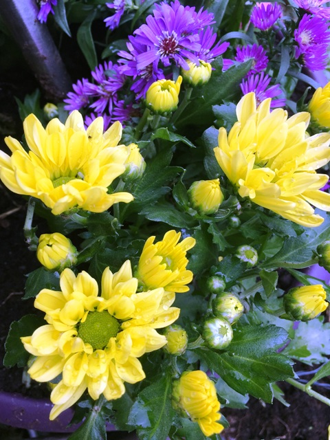Herbstblumen Gegen Den Herbstblues Manuelas Bunte Welt