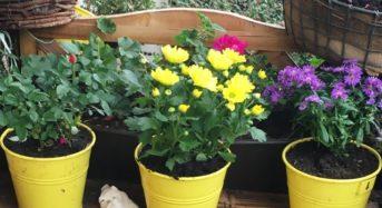 Herbstblumen –  gegen den Herbstblues