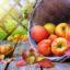 Apfelmus selber machen – schnell und einfach