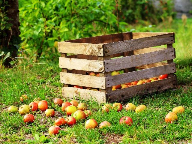 Apfelmus selber machen, Quelle: pixabay