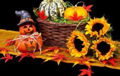Kürbisse – das schmackhafte Herbstgemüse