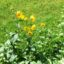 Alte Gemüsearten – 7 seltene Gemüsesorten..