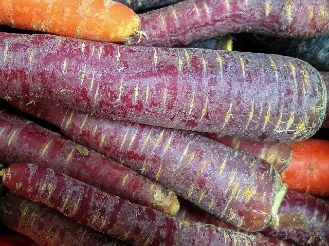 Alte Gemüsearten, Lila Karotten, Quelle: pixabay