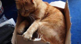 Weihnachtsgeschenke für die Katze – Anzeige