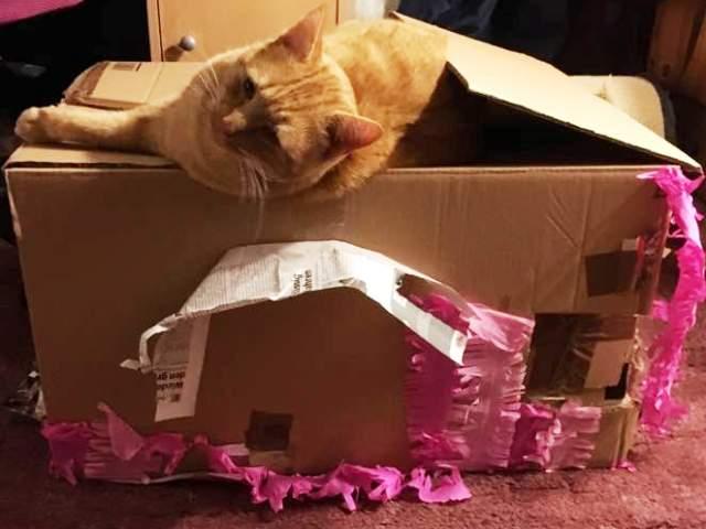 Weihnachtsgeschenke Für Die Katze Manuelas Bunte Welt