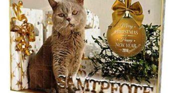 Adventskalender für Katzen – Anzeige