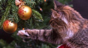 Weihnachtsbaum: Wissenswertes und Informatives
