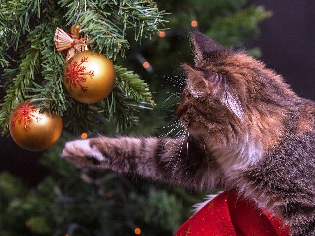Weihnachtsbaum, Quelle: pixabay