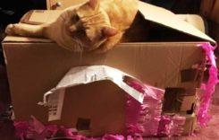 Katzenspiele – 5 Tipps gegen Langeweile