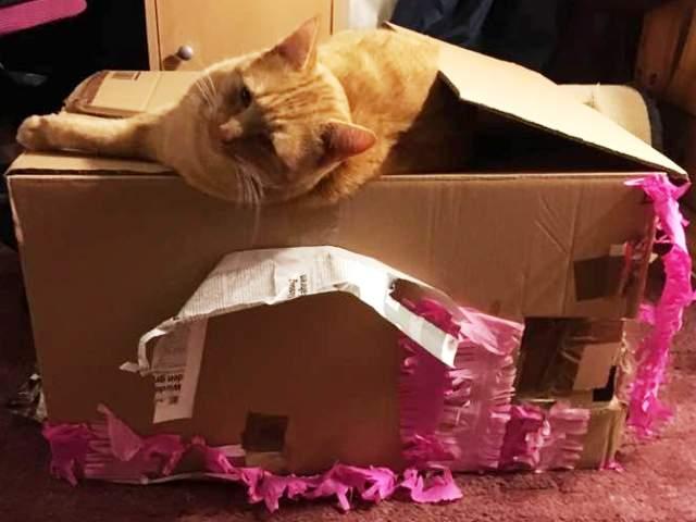 Katzenspiele, unser Paddington
