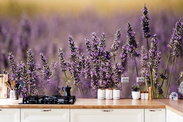Fototapete Lavendel in der Küche, Quelle: myloview.de
