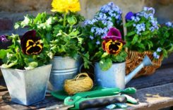 Blumenerde: Welche Erde ist die Richtige?