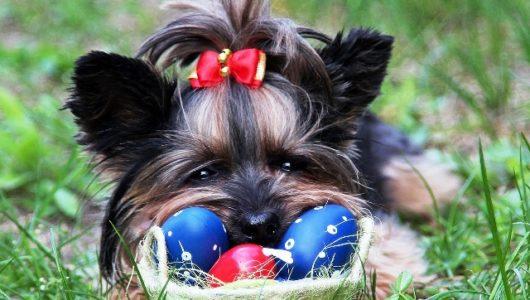 Ostern mit Katze und Hund