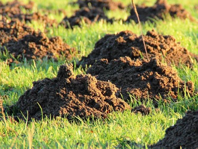 Rasenschäden, Maulwurfhügel, Quelle: pixabay