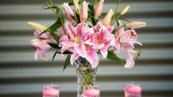 Lilien – Lilienarten, Pflege und Pflanzung