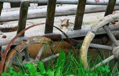 Schädlingsbekämpfung bei Holzwurmbefall