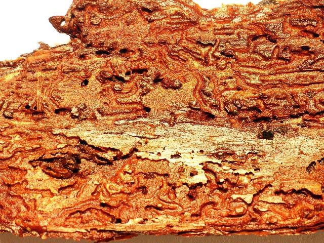 Schädlingsbekämpfung, Holzwürmer, Quelle: pixabay