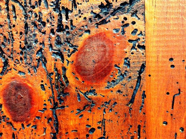 Holzwürmer, Quelle: pixabay