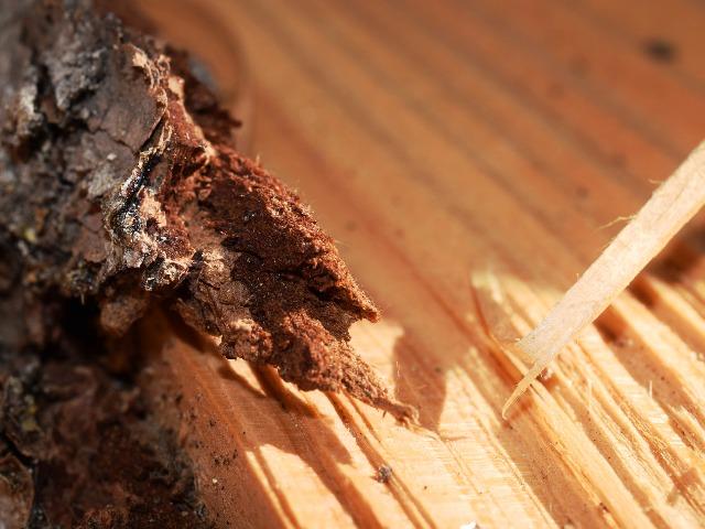 Schädlingsbekämpfung, Quelle: pixabay