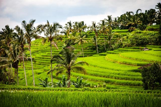 Gruppenreisen, Reisterasse auf Bali, Quelle: pixabay