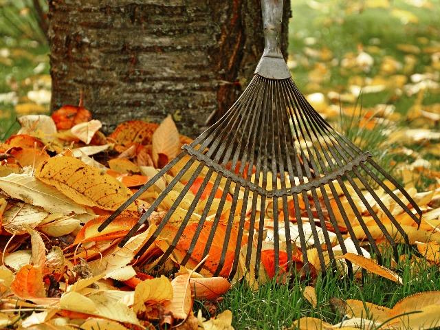 Laub, umweltgerecht entsorgen, Quelle: pixabay
