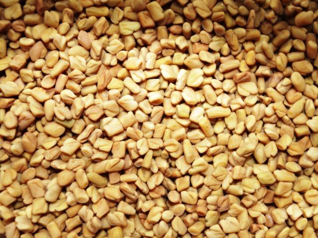 Bockshonklee-Samen, Bild von Ajale auf Pixabay