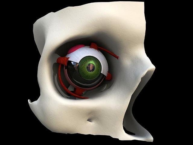 Augenkrankheiten, Bild von Reimund Bertrams auf Pixabay