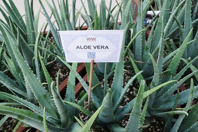 Aloe Vera, Bild von photosforyou auf Pixabay