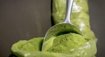 Vegane Moringa Kosmetik – Das kann sie bewirken