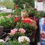 Pflanzentipps und stylische Ideen für die Balkongestaltung